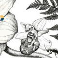 Histoire Naturelle et Systèmes Complexes – Problématiques, méthodes et enjeux